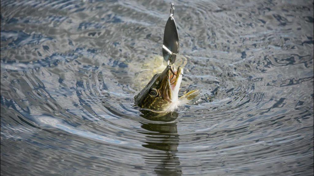 Календарь поклевки щуки - когда ловить рыбу